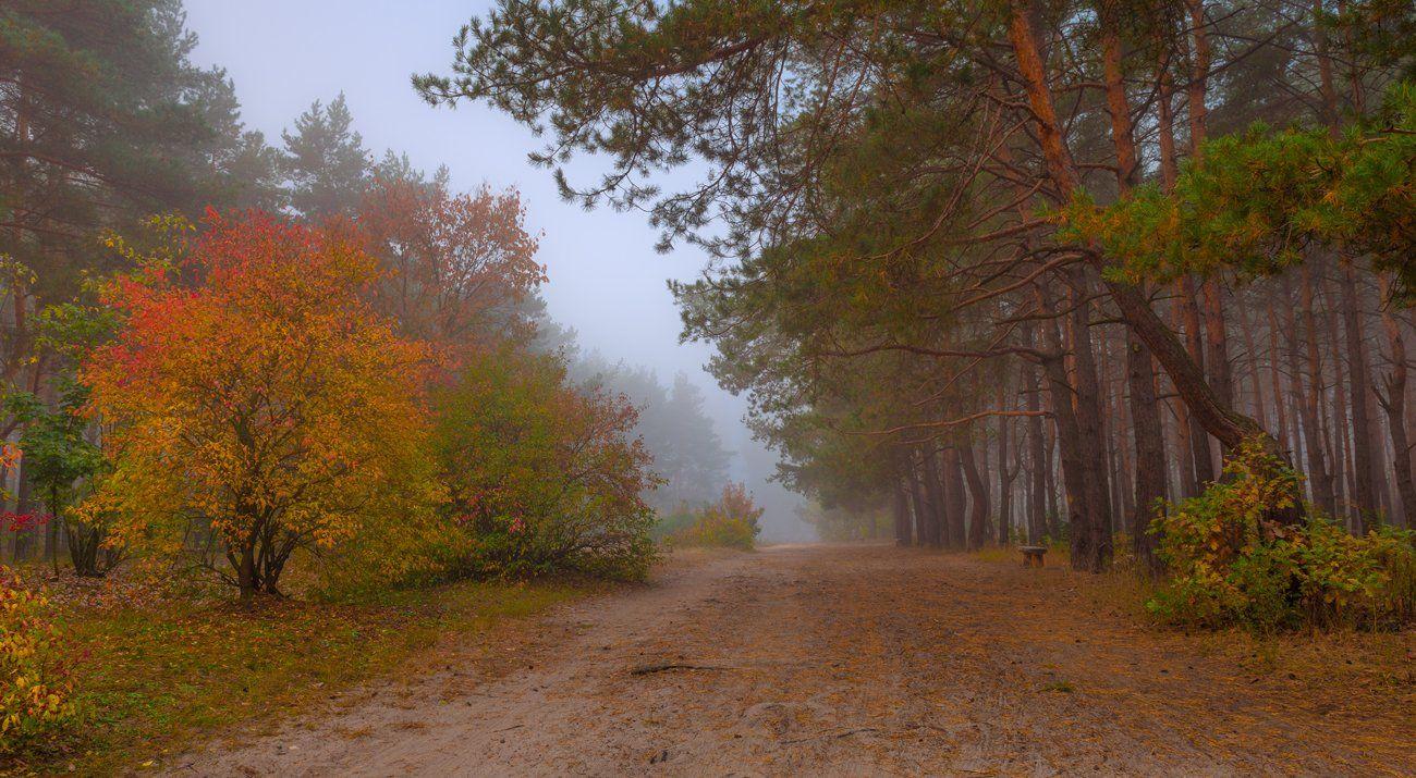 осень, октябрь, лес, туман, Галанзовская Оксана