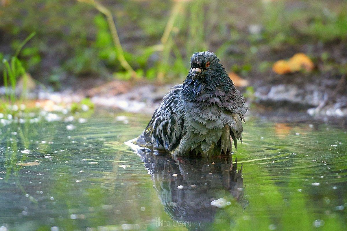 bird,, Akira Enzeru