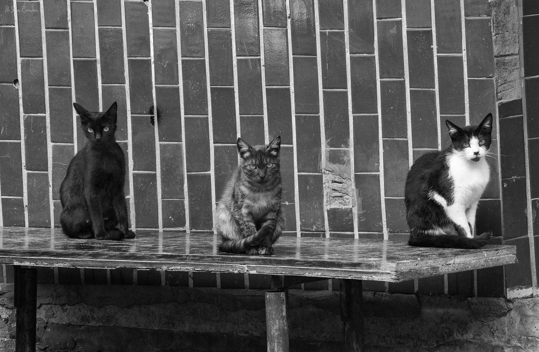 коты,котяры,котики,улица,подьезд,лавочка, Roma Krasov ( Chitinskiy )