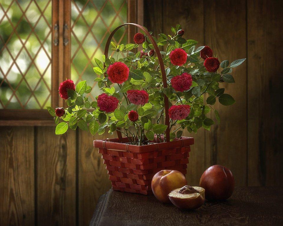 натюрморт, художественное фото, лето, дача, куст комнатных роз, красные розы, персики, Ирина Приходько