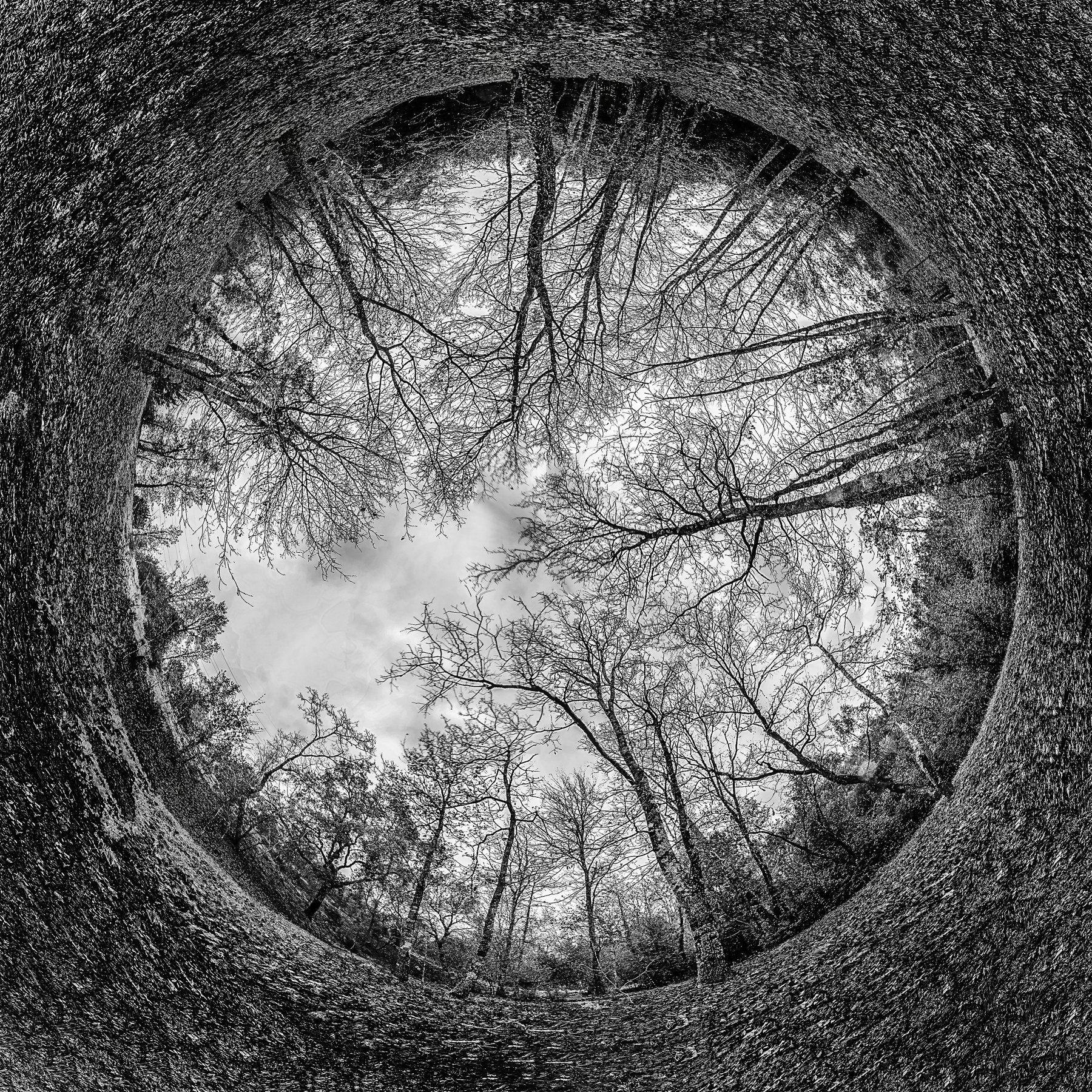 bnw, tree, round, world, sky, nature, Antonio Bernardino