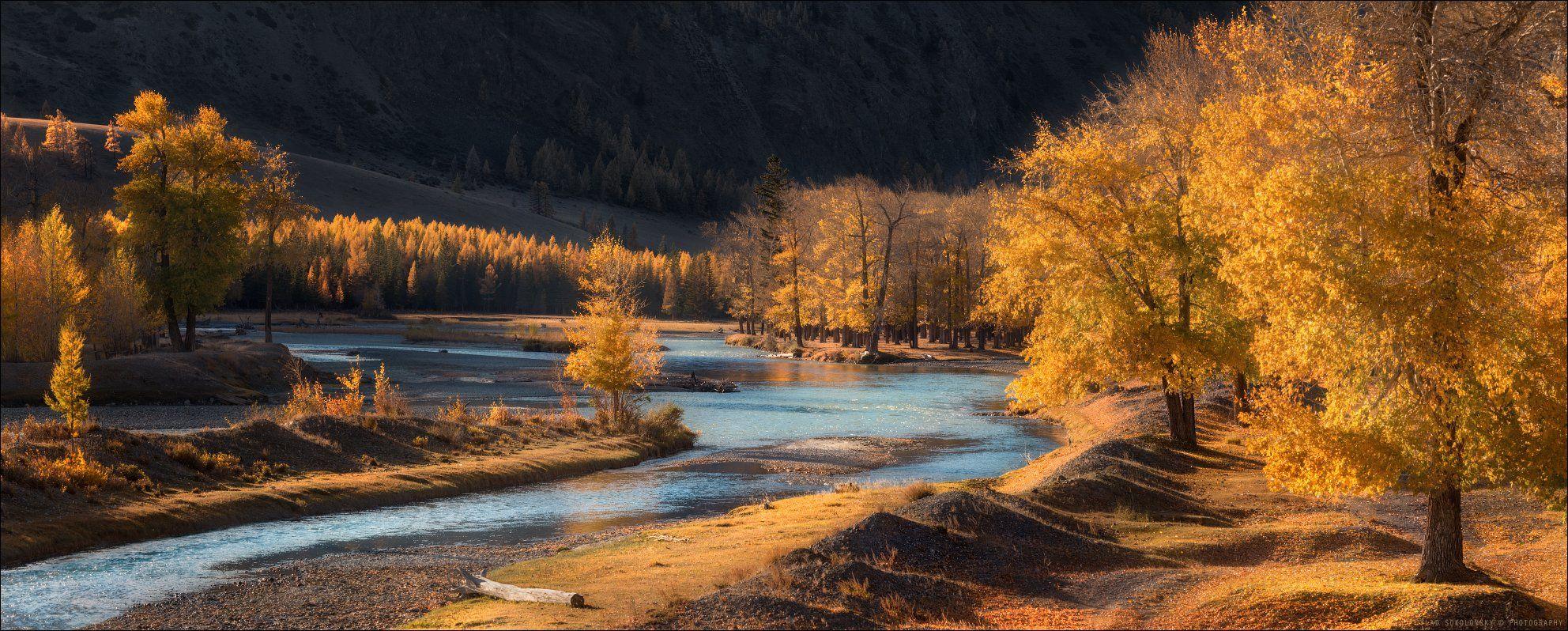 Алтай, горы, осень, река, Чуя, Курайская степь, золото, тополь,, Влад Соколовский