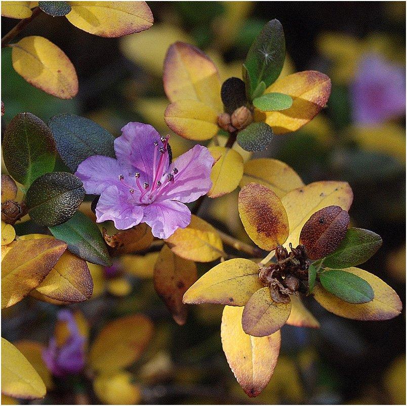 осень, цветок, времена_года, VictorSe