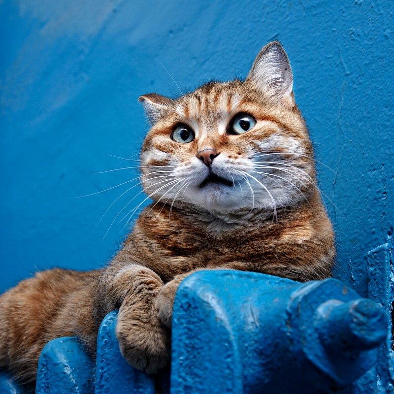 кошки,коты, vlad starov