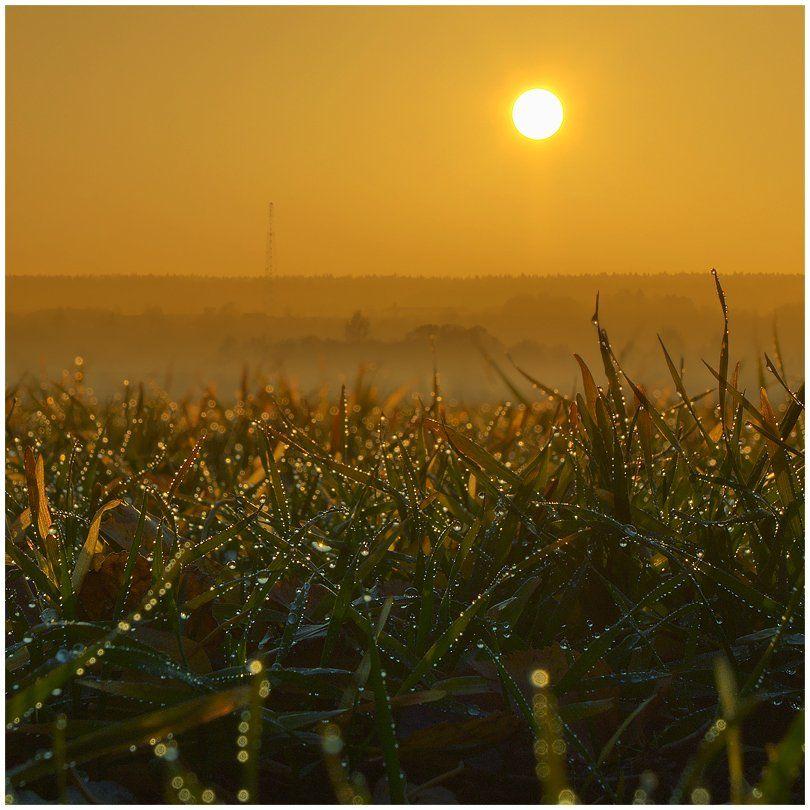 закат, роса, пейзаж, капли, трава, солнце, Oleg Dmitriev
