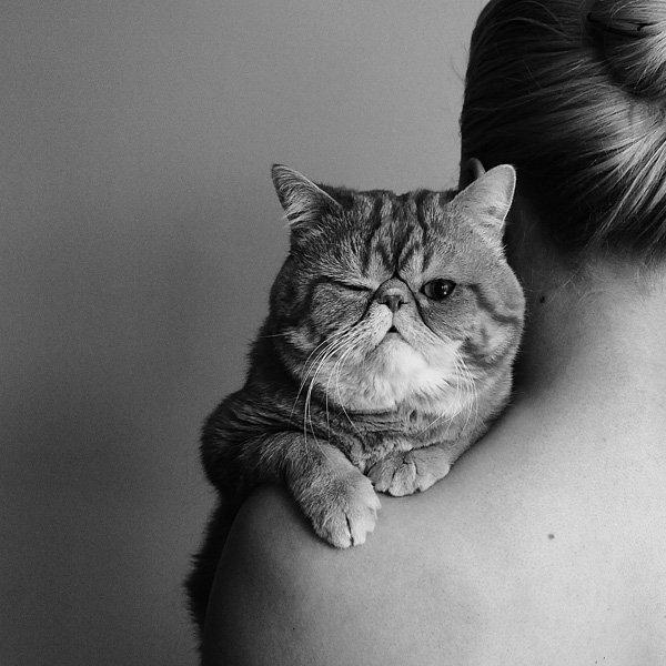 cat, girl, девушка, портрет, кот, Elena