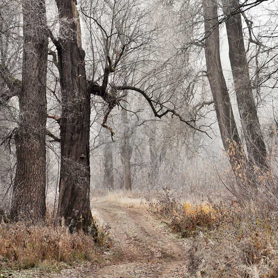 осень,, заморозки, туман, ноябрь, Sergey