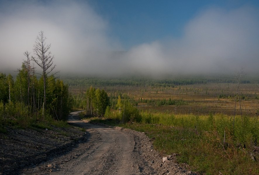 тайга, пейзажи, август 2010, софийск, хабаровский край, Kovalchuk_VO