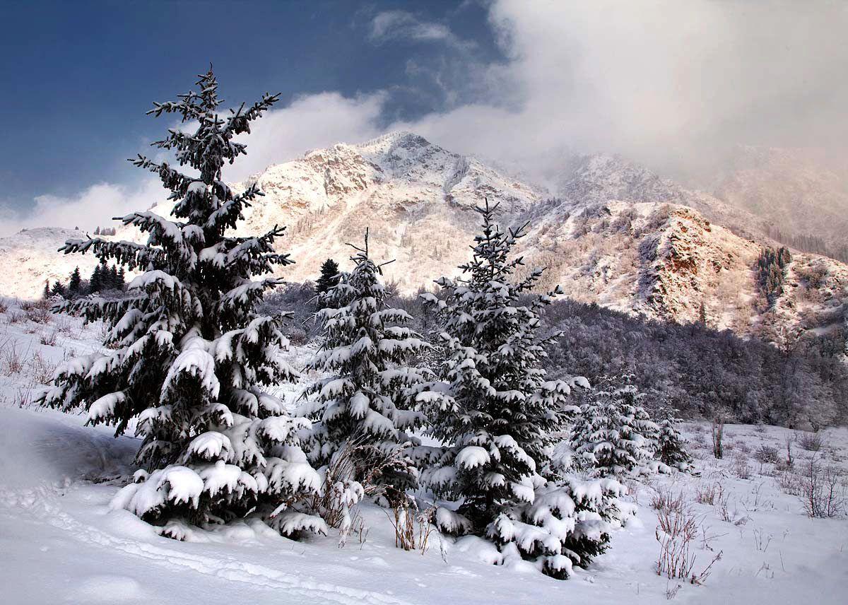 казахстан, иссык, зима, ели, снег, скалы, свет, вечер., Чишко Василий