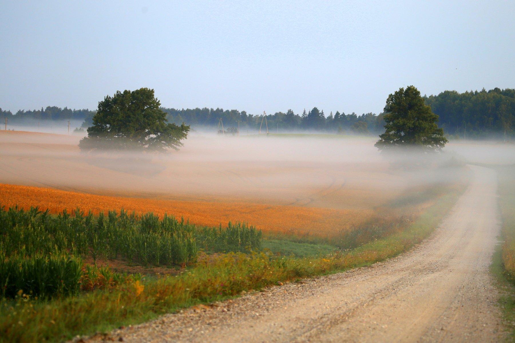 осень, дорога, туман, Dzintra Zvagina