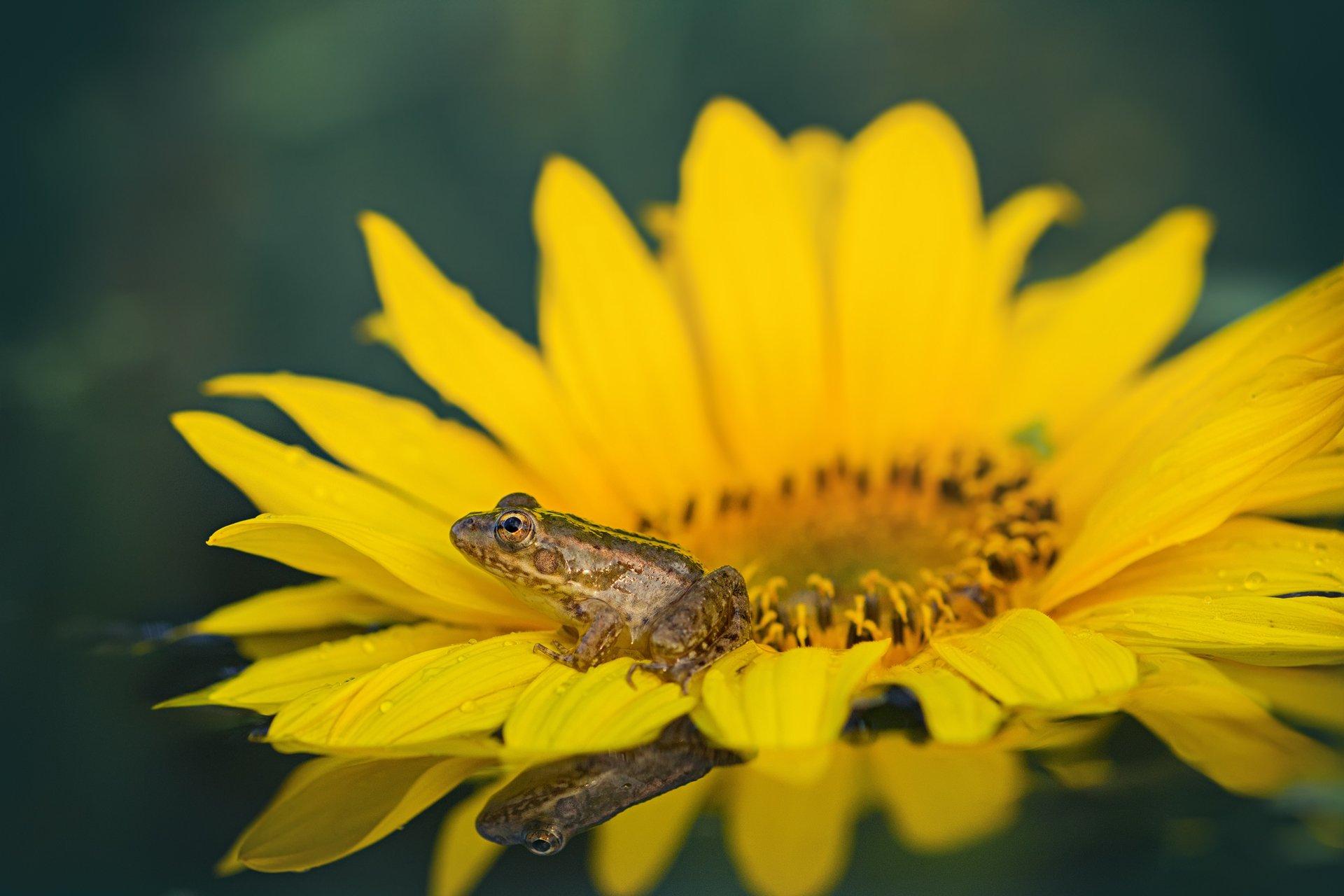 листья, ветки, осень, свет, блик, деревья,лягушка,глаз,цветок, Котов Юрий