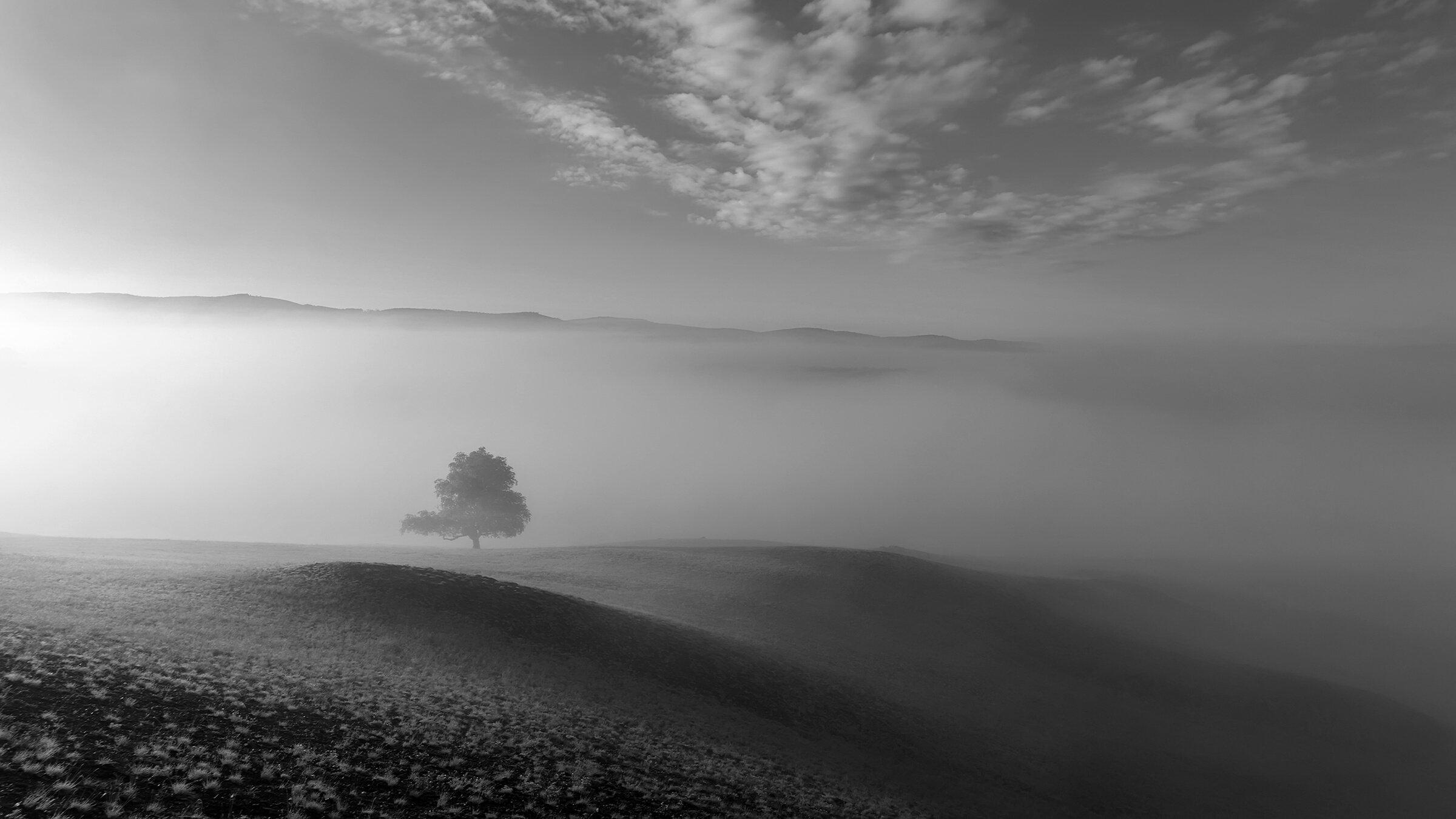 утро, рассвет, туман, Леонид