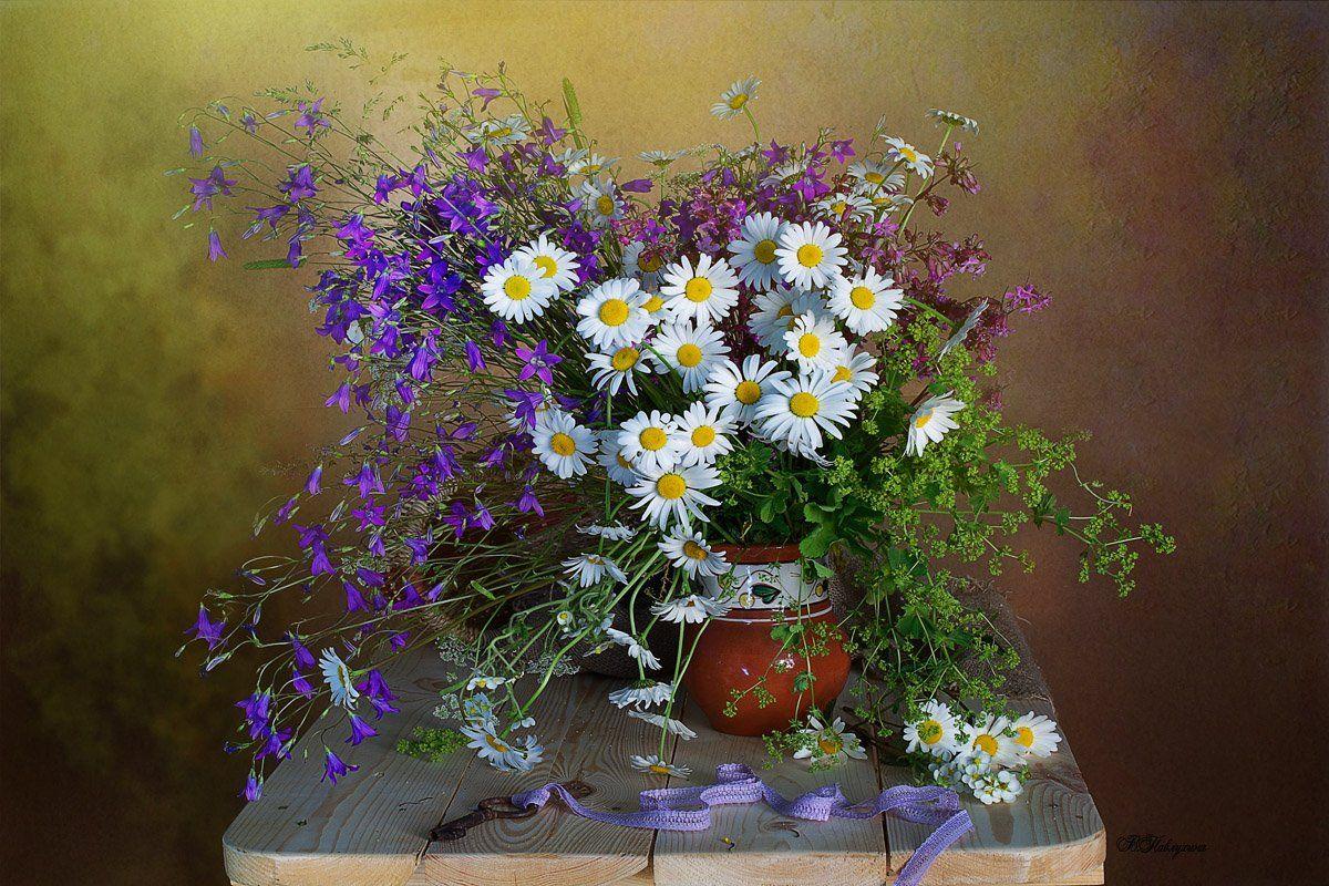Полевые цветы Вера Павлухина