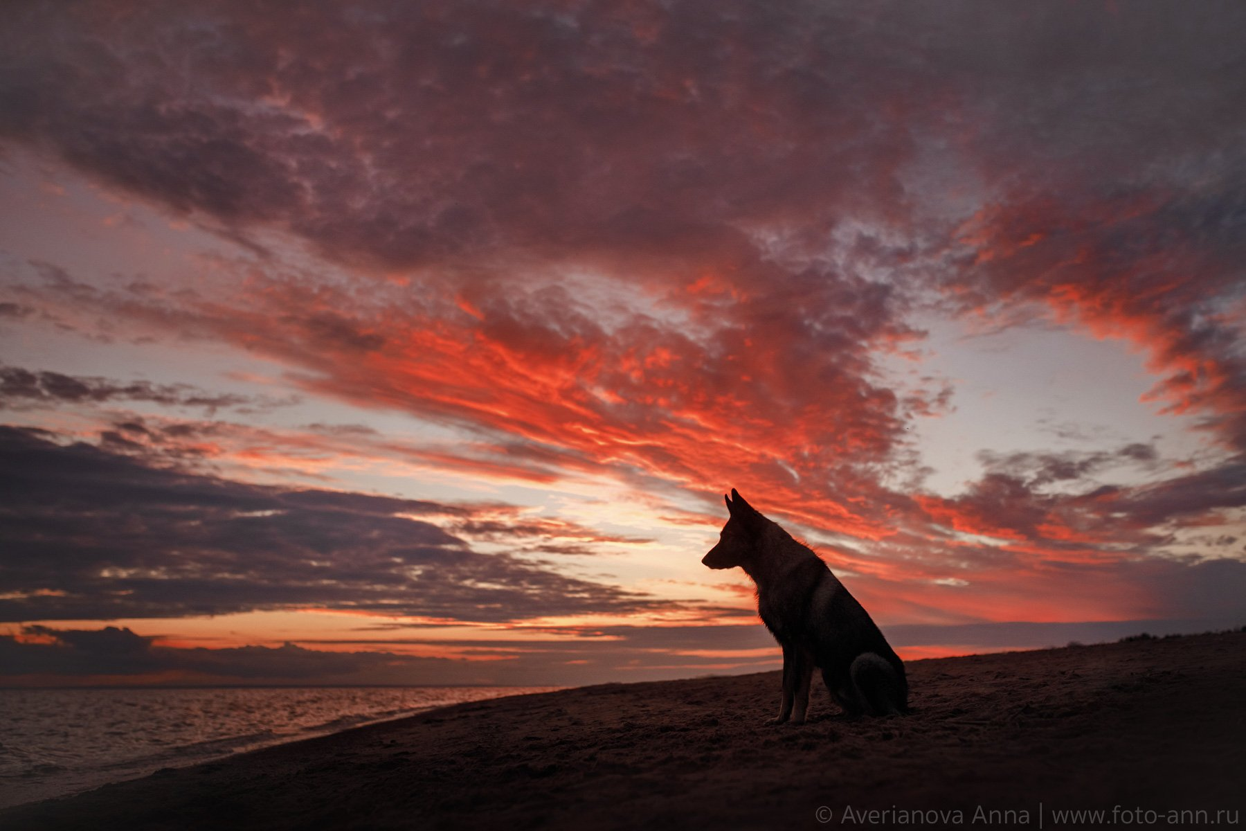 собака, закат, природа, небо, Анна Аверьянова