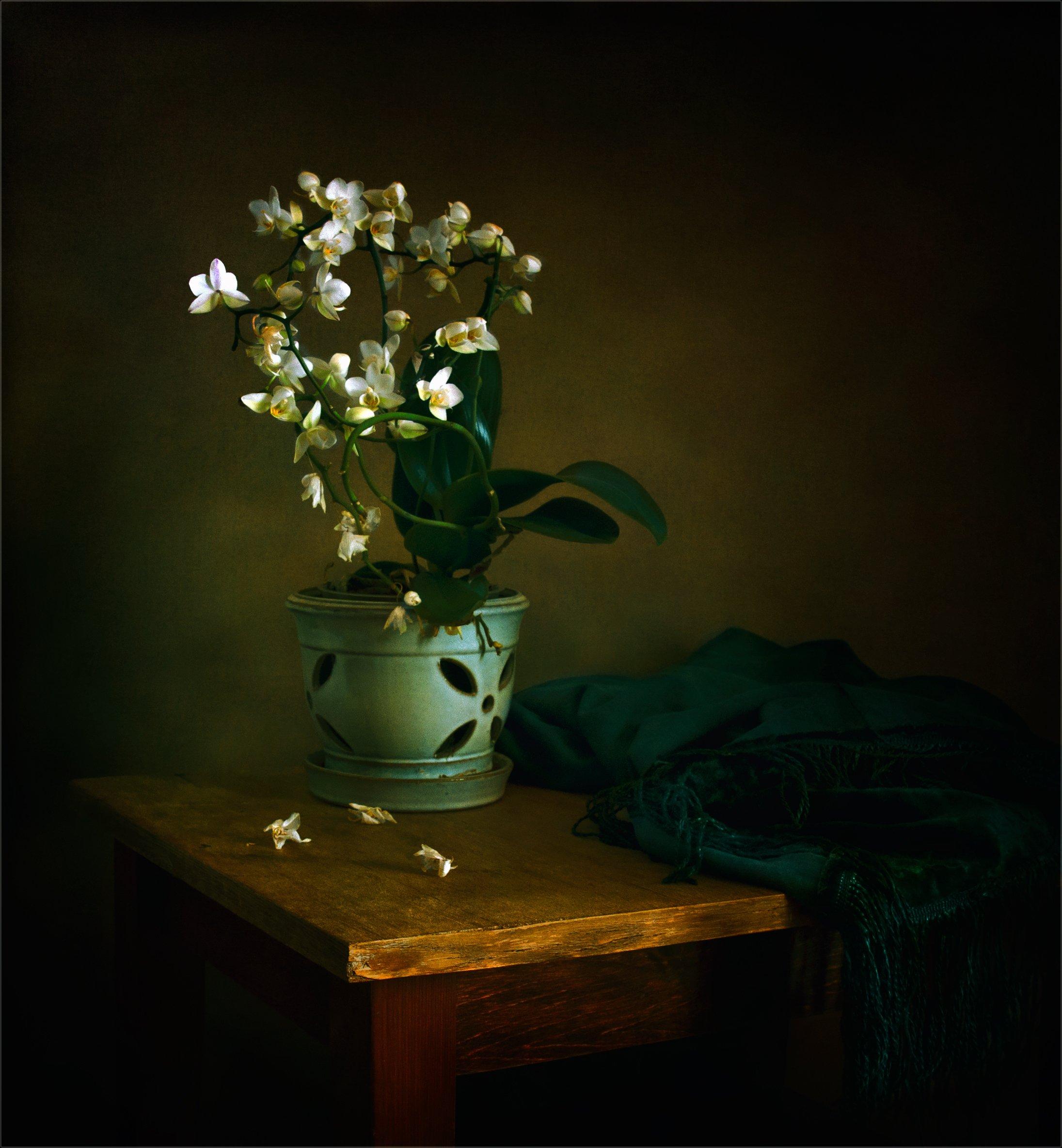 still life, натюрморт,   винтаж, ретро, орхидея, цветы, природа, Михаил MSH