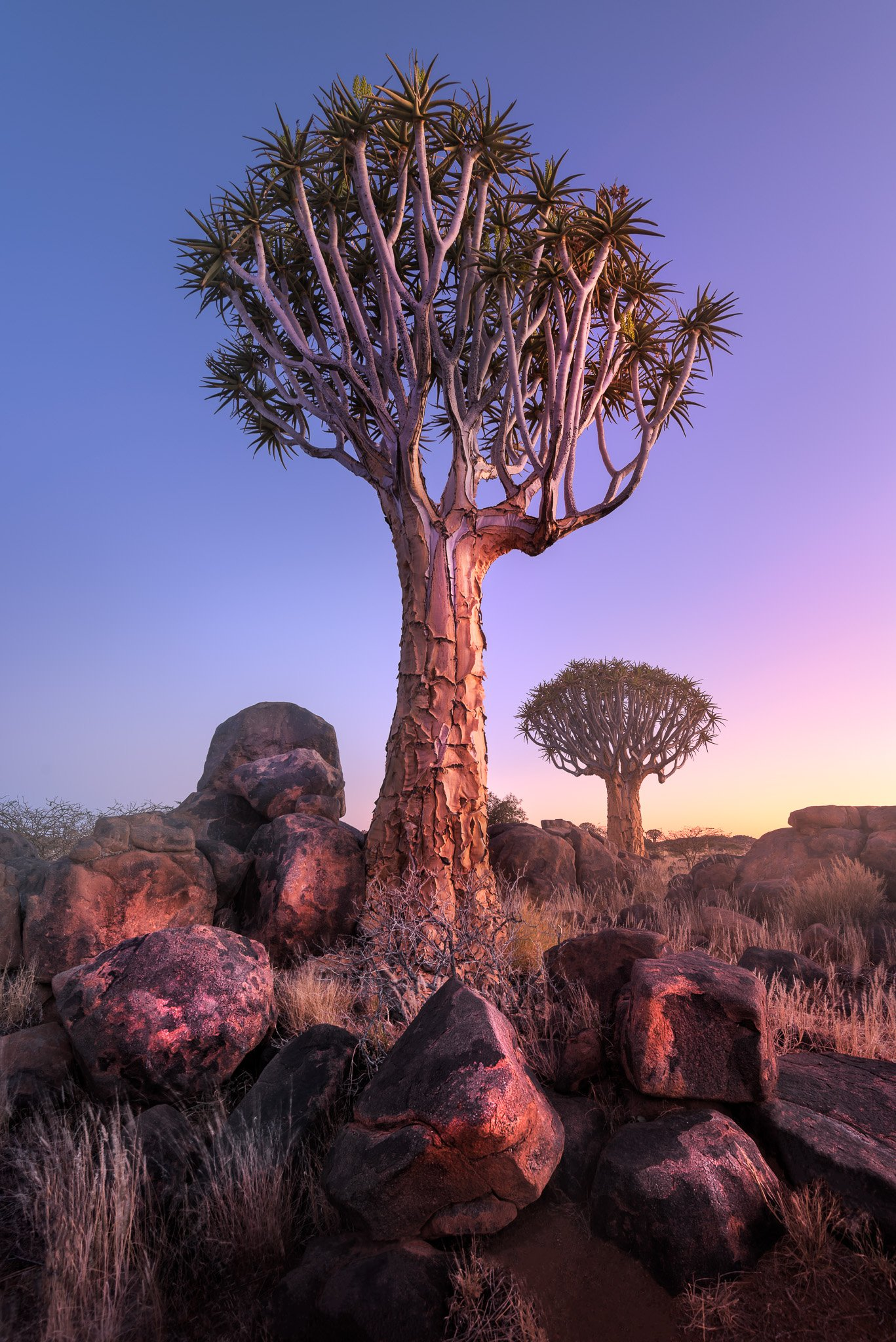 Africa, african, aloe, arid, bark, black, blue, branches, bush, dawn, desert, dichotoma, dry, forest, giant, granite, grass, green, keetmanshoop, landscape, light, magical, morning, mystical, namib, namibia, national, natural, nature, outdoor, park, plant, anshar