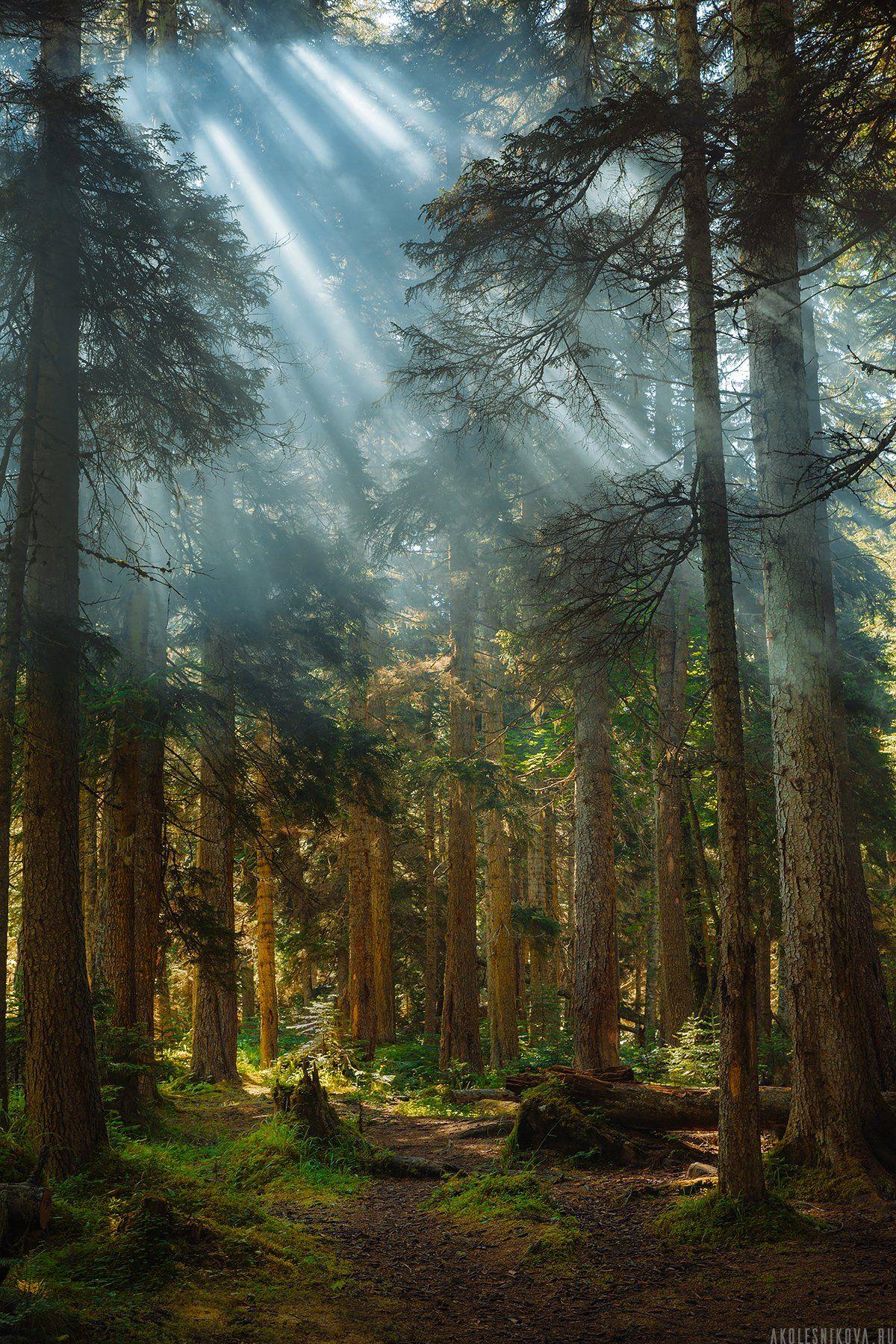 природа, лес, путешествие, домбай, рассвет, пейзаж, лето, свет, Анастасия Колесникова