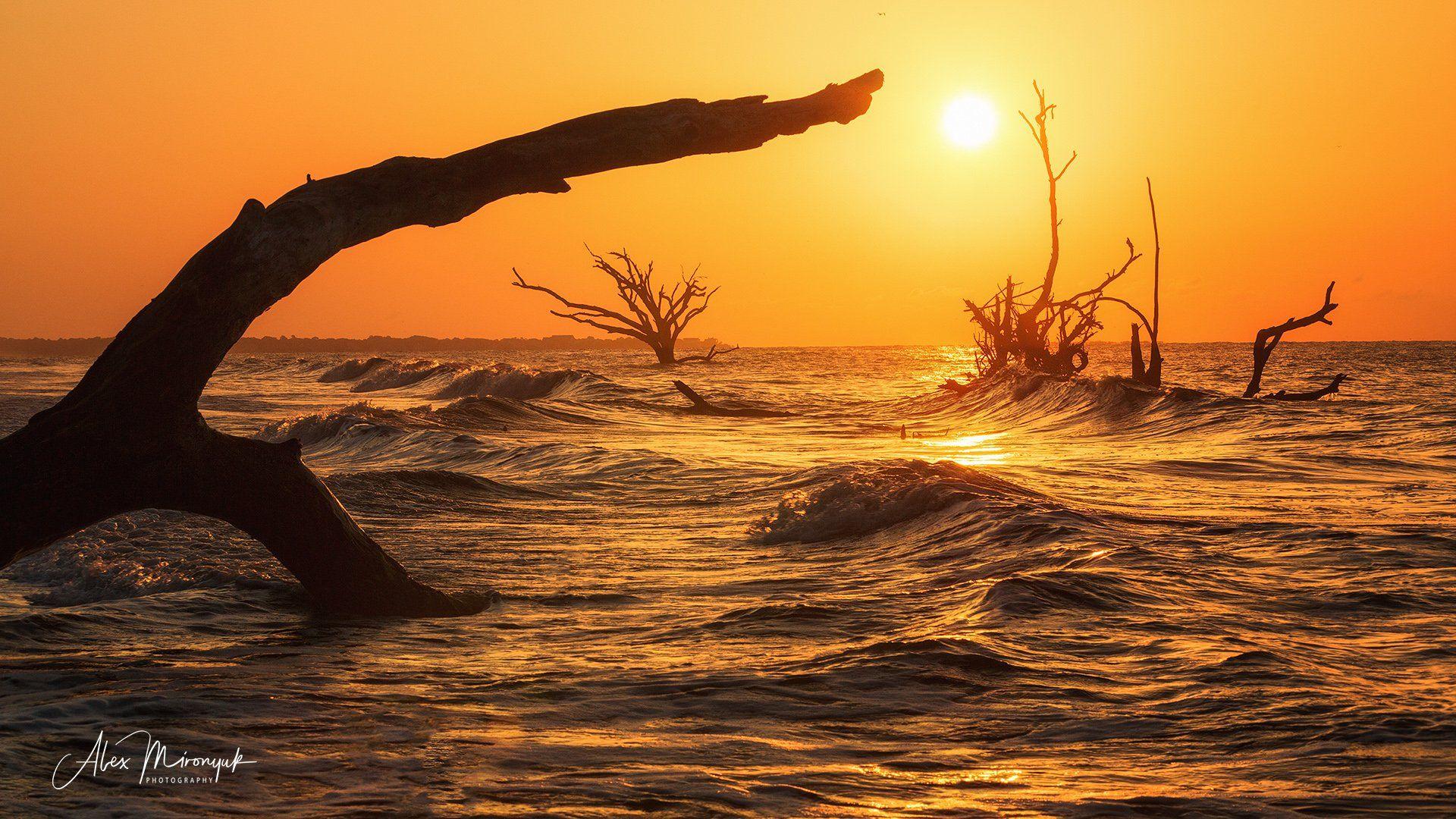 пляж, дерево, рассвет, солнце, океан, море, сухое дерево,, Alex Mironyuk