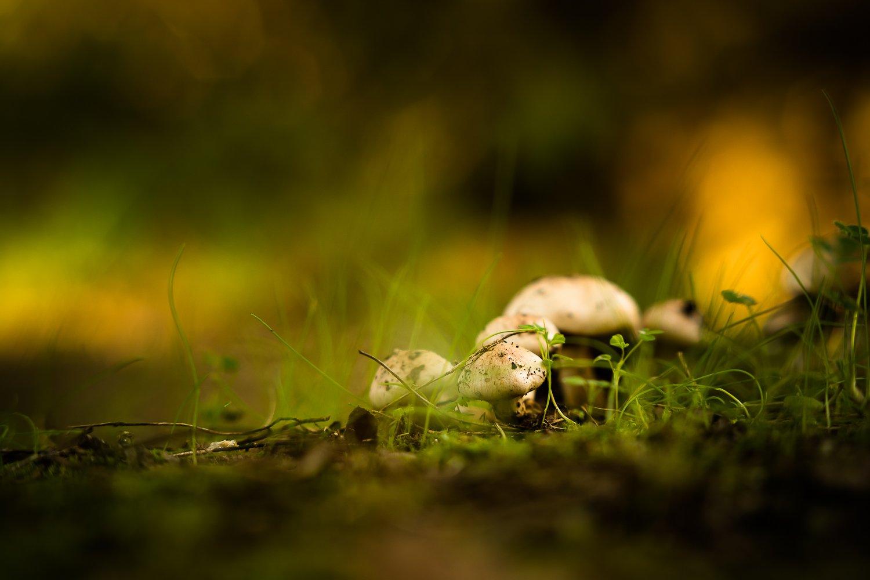 mushroom, nature, ground, grass, грибы, природа, земля, трава, Antonio Bernardino