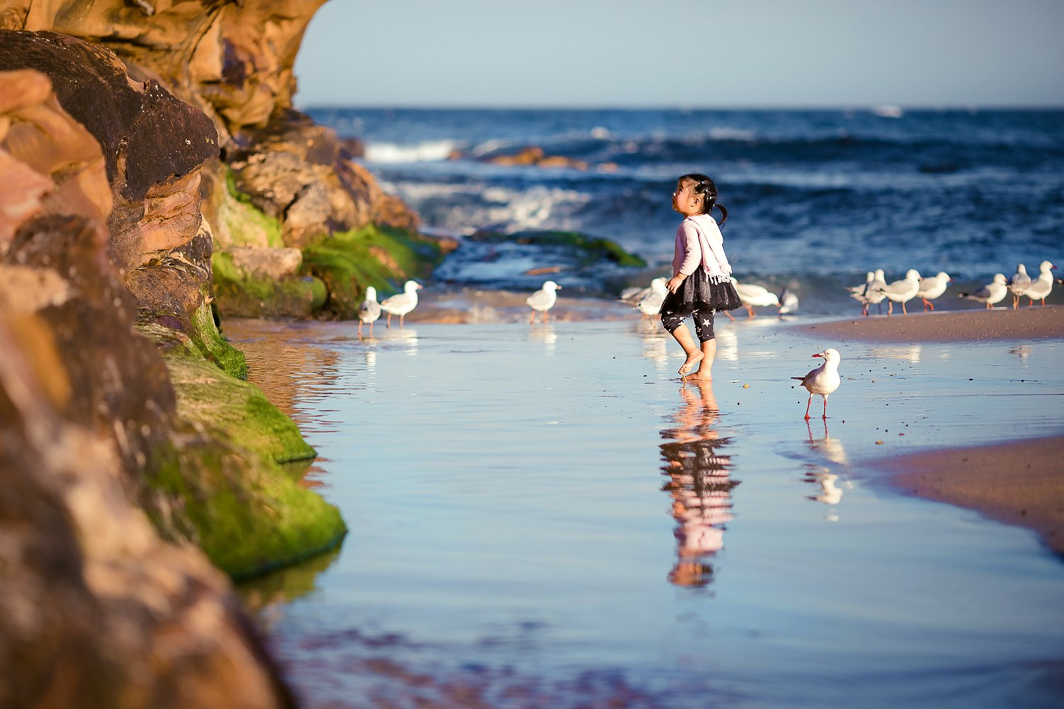 sunny, beach, blue, waves, sea, seaside, cute, seagull, childhood, lifestyle, Derek Zhang