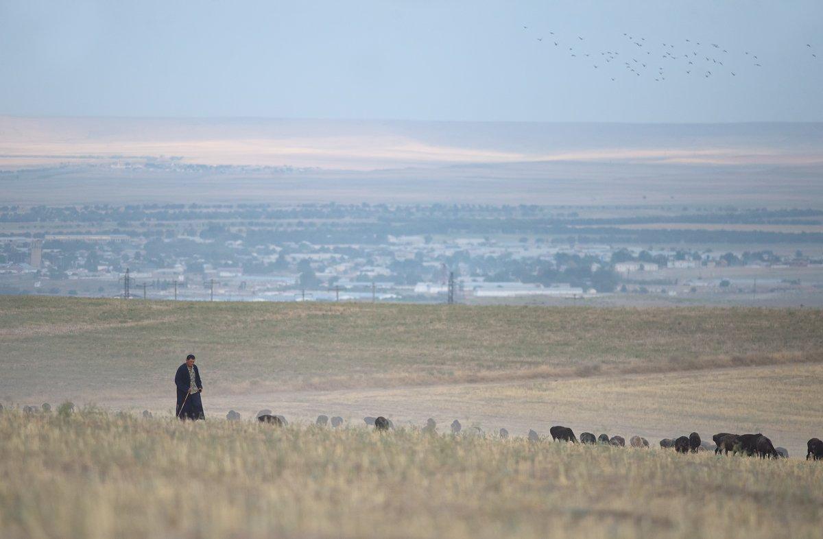 узбекистан, путешествие, пустыня, пастух, чабан, travel, uzbekistan, street, desert, ussr, город, city, Илья Гомыранов