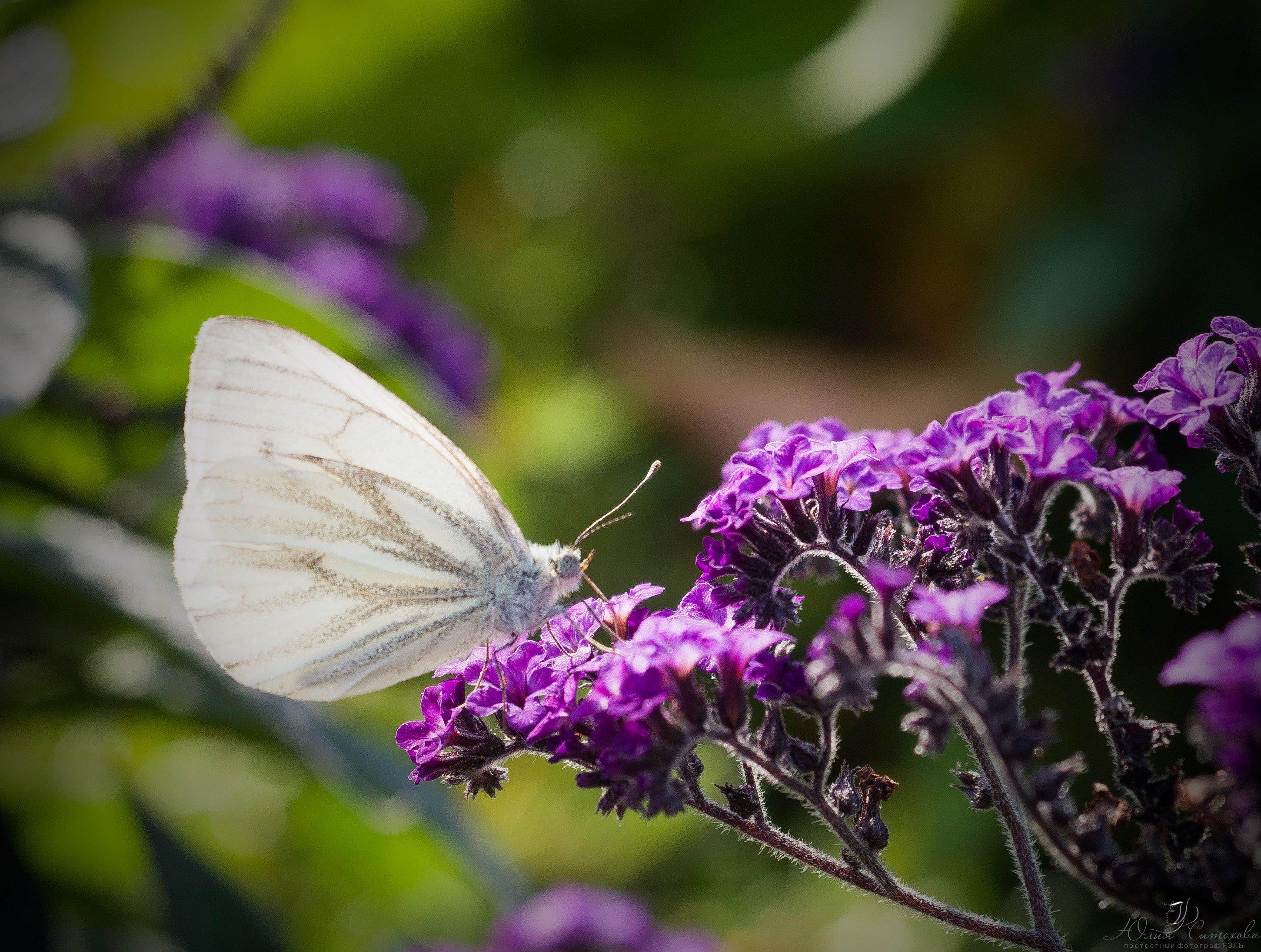Бабочка, цветы, лето, Яэль (Юлия Ситохова)