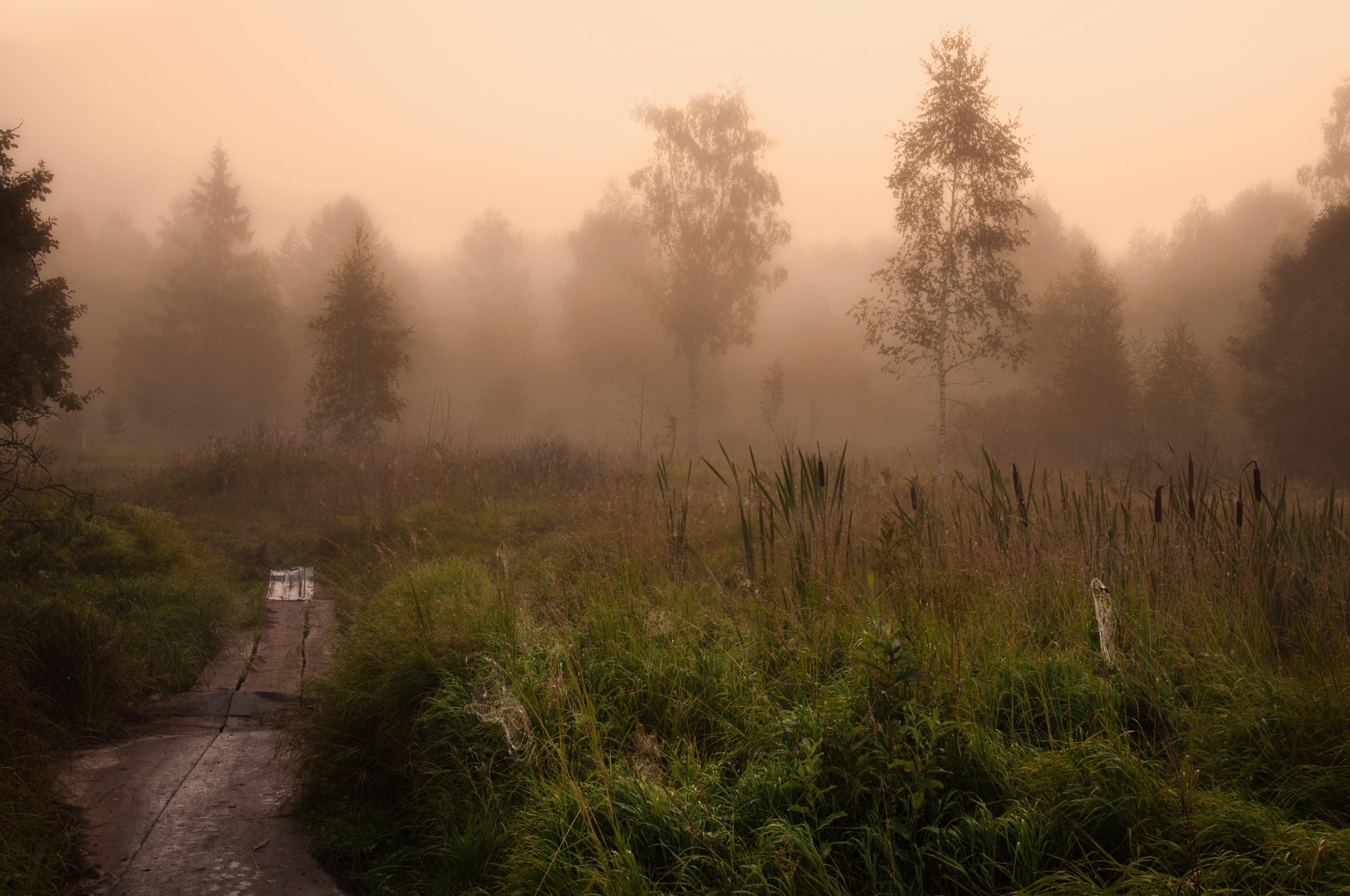 утро, рассвет, природа, пейзаж, туман, осень, Алексей Сергованцев