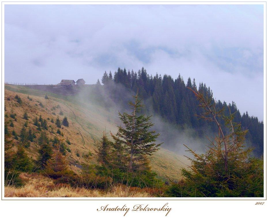 карпаты, горы, весна, туман, облака, лес, ель, анатолий покровский, Анатолий Покровский