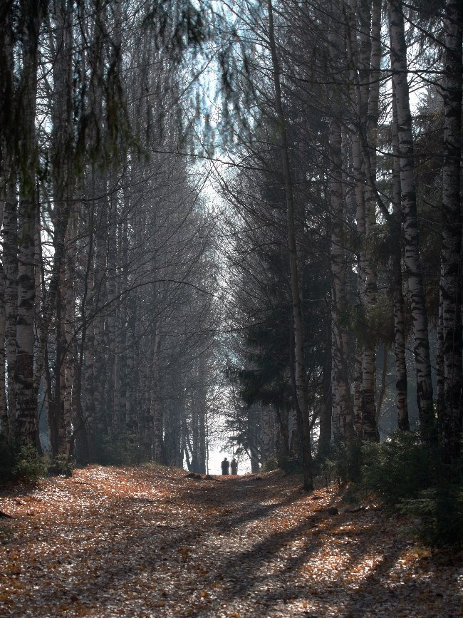 осень, Дмитрий Алексеев