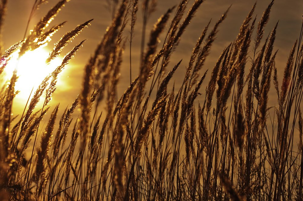 поле, осень, трава, закат, Екатерина Муганлинская