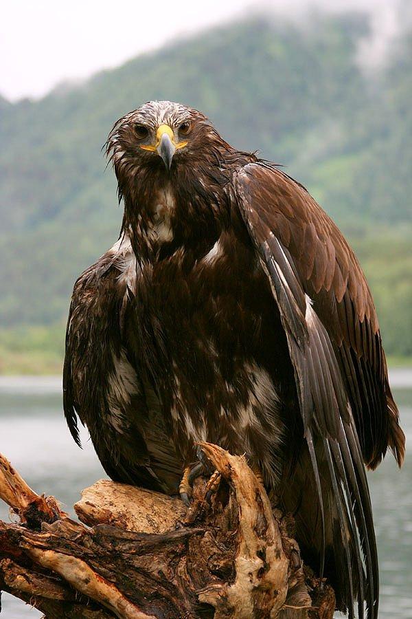 животные, птицы, фауна, Римма