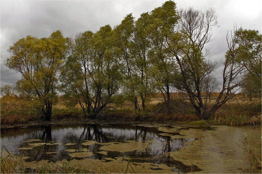 осень,пруд,трава,деревья,вода., СПИРИДОНОВ НИКОЛАЙ