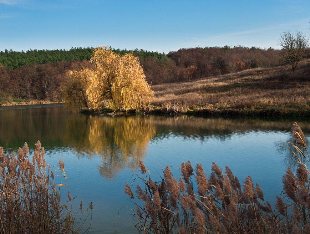 озеро, ноябрь, небо, отражения, ива, Elena