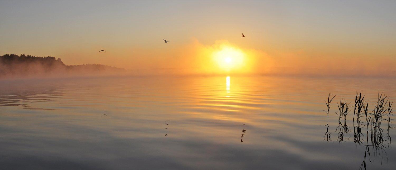 рассвет, утро, пробуждение, озеро, птицы, солнце, вода, восход, Динара