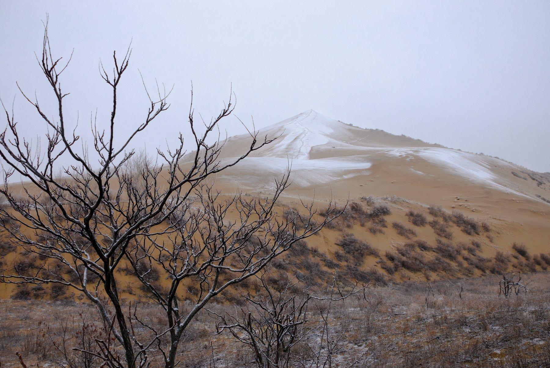 бархан,сарыкумский бархан,январь,зима,песок,снег,песчаный,японские мотивы,куст,деревце,ветви,вершина, Соварцева Ксюша