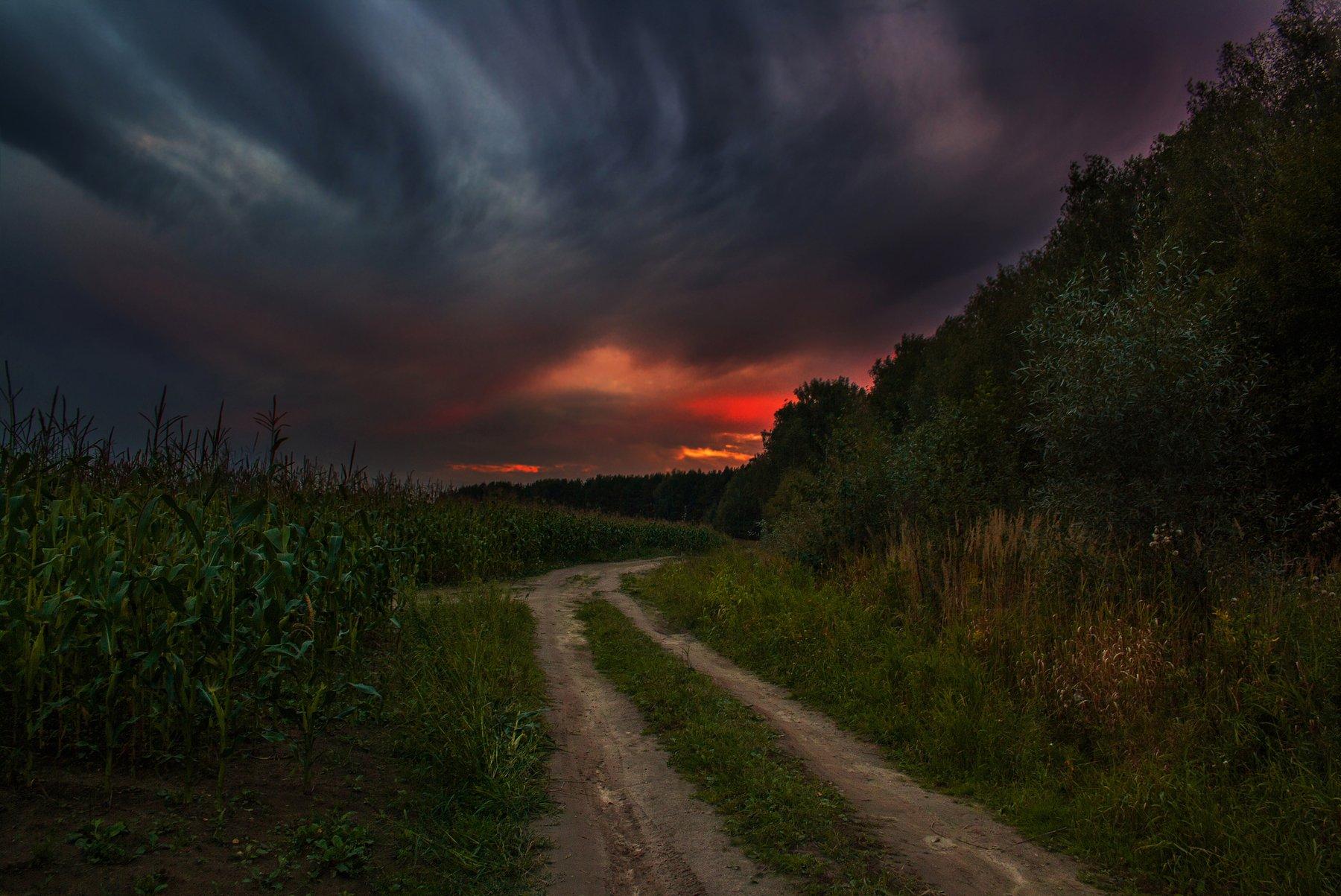 закат, осень, поле, дорога, лес, Екатерина