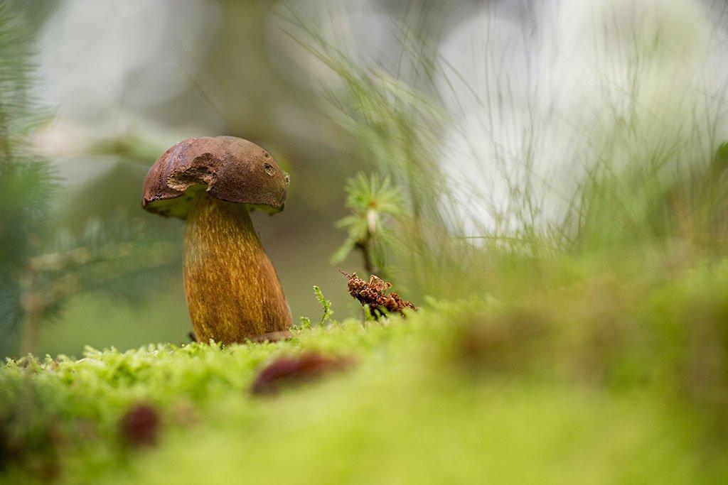 гриб,  осень, заросли, листья, ветви, дерево, мох, деревья, растения, природа, осень, фон, зеленый, коричневый, красиво, листва, облачно., Виктор