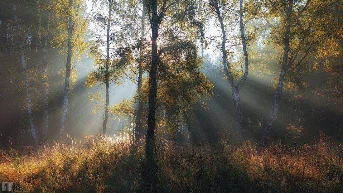 осень, лучи, туман, утро, лес,, Дмитрий Доронин