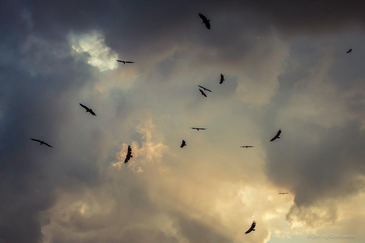 #animals #birds # #sunset #maderuelo #spain #PhotoByDmitryGorkovets #landscapes, Горковец Дмитрий