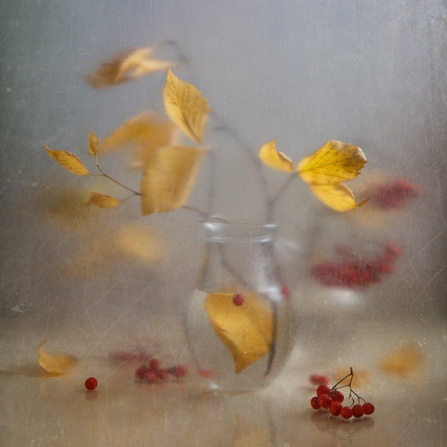 осень, листья, полиэтилен, мутность, натюрморт, рябина, Виктория