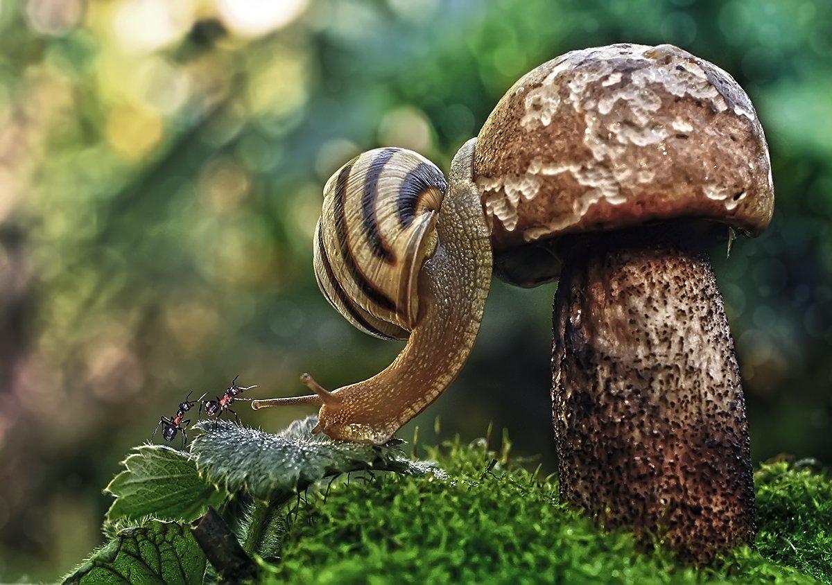 улитка,гриб,макро,осень,муравей, Гарик Соколов