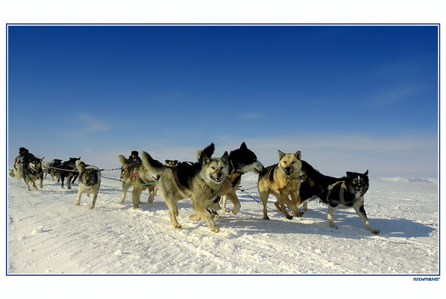 чукотка, собачья упряжка, гонка, надежда - 2007, лаврентия, провидения, азарт, chukotka, snowmaker, snowmaker