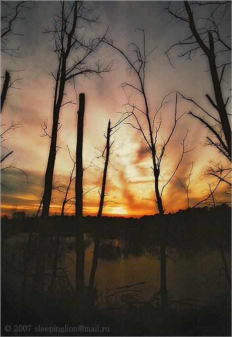 пейзаж, пленка, 35 мм, pilgrim, закат, Pilgrim