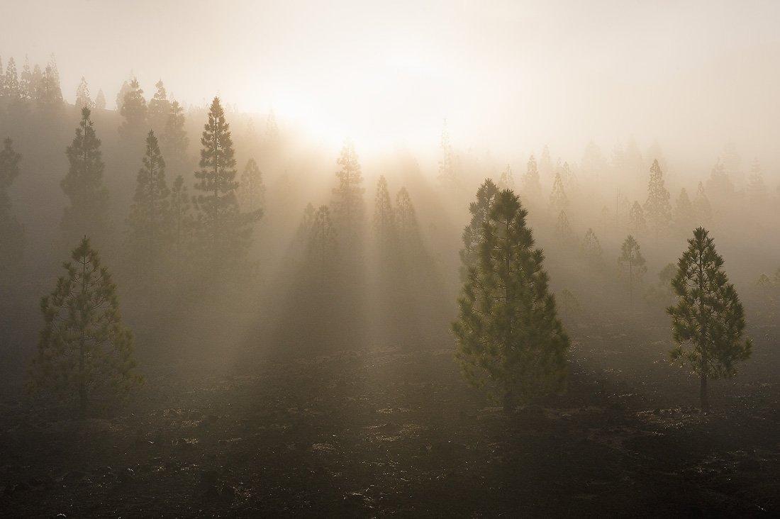 тенерифе,утро,рассвет,лас каньядас дель тейде, Александр Константинов