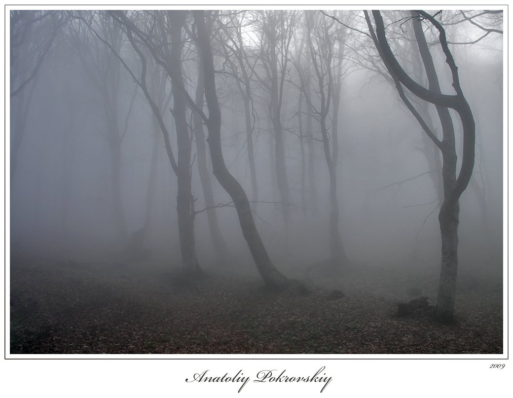 лес, туман, дерево, бук, горы, анатолий покровский, Анатолий Покровский