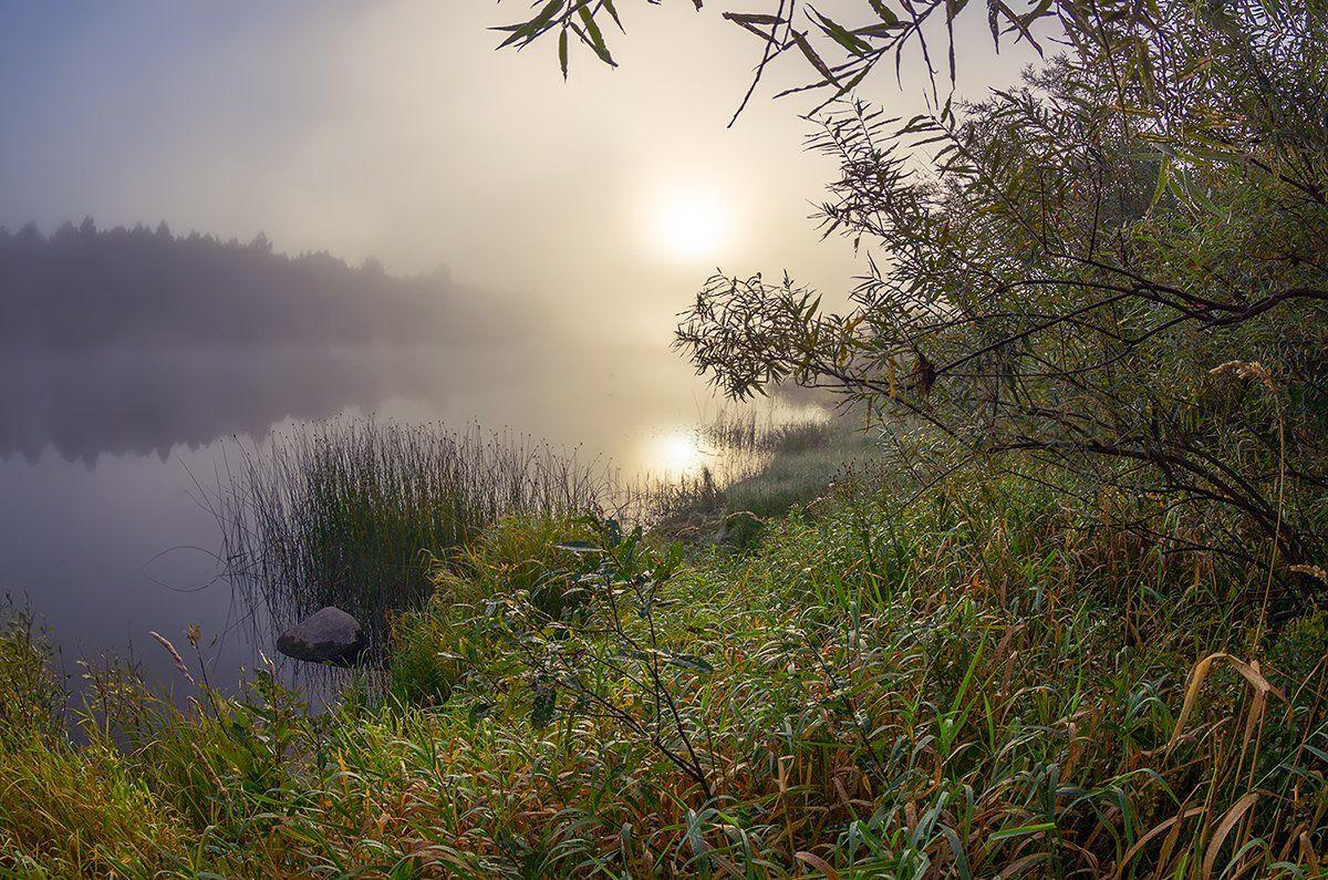 молога туман осень река сентябрь, Марина Мурашова