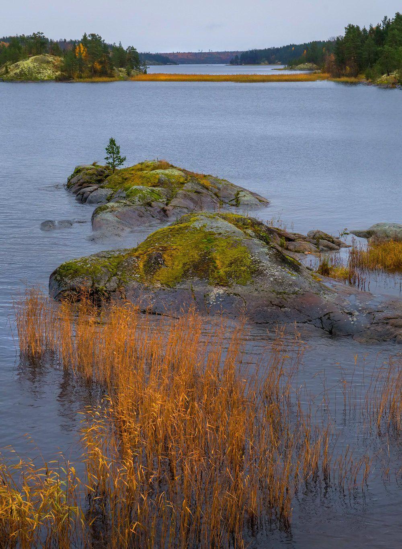 ладожское озеро, карелия, шхеры, природа, скалы, вода, лес, сосны, остров, охотник, непогода, осень, тростник., Лашков Фёдор
