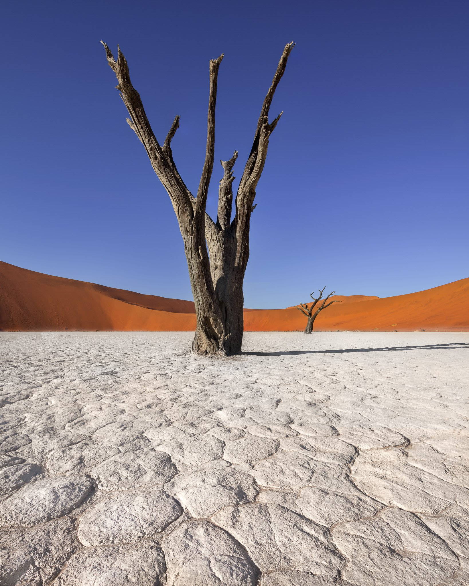 acacia, Africa, african, arid, beautiful, blue, branch, camelthorn, clay, day, daylight, dead, deadvlei, desert, drought, dry, dune, famous, forest, hot, lake, landmark, landscape, morning, namib, namibia, namibian, national, nature, naukluft, orange, out, anshar