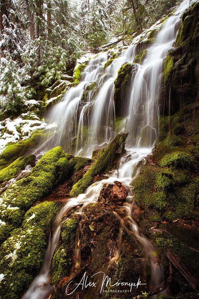 водопад, сша, орегон, зима, снег, вода, ручей, камень, мох, лес, ель, деревья, природа, фототур, Alex Mironyuk