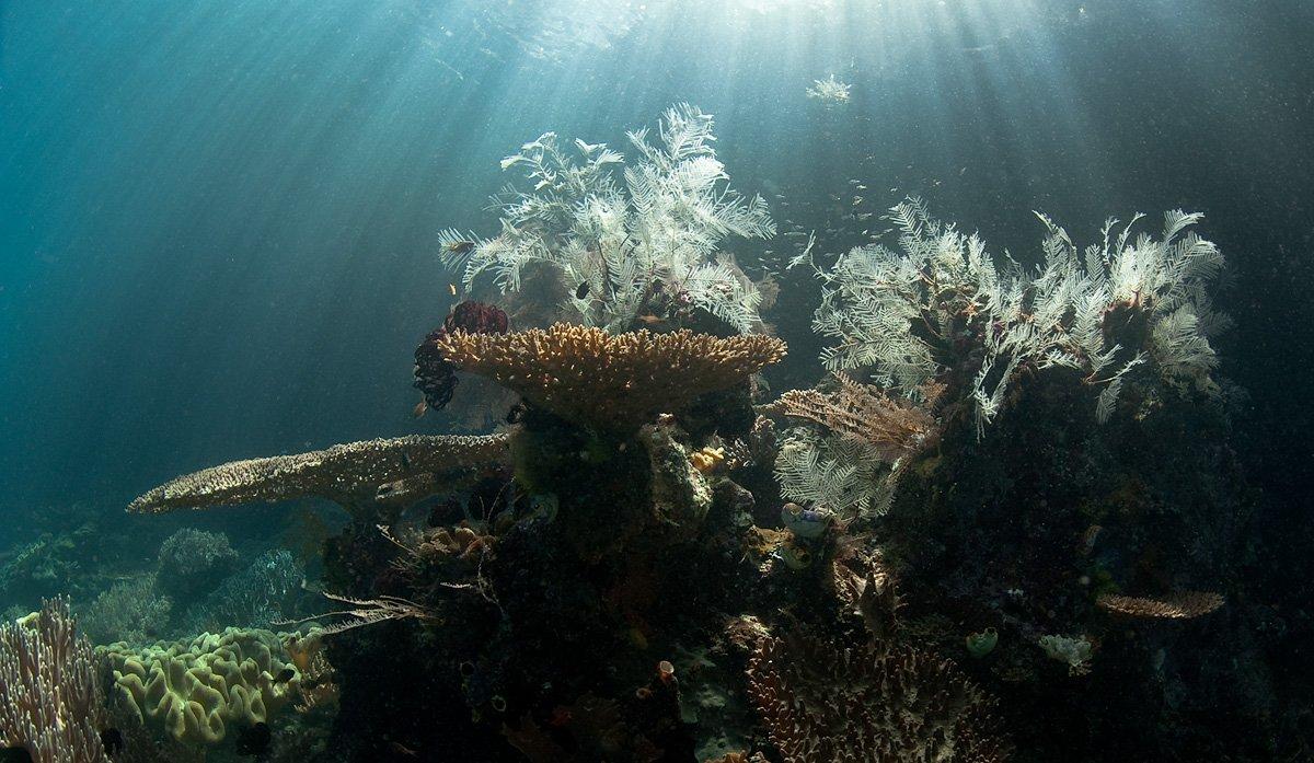 кораллы, свет, underwater, mermaid, Виктор Чистов